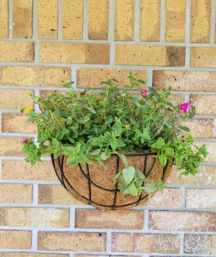 Basket Wall Planters Indoor