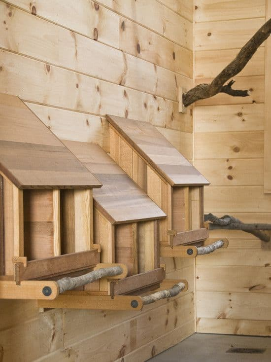 Branches Chicken Roost Ideas