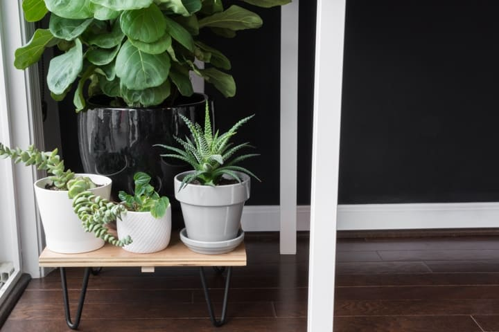 DIY Hairpin Legs Plant Stand Ideas