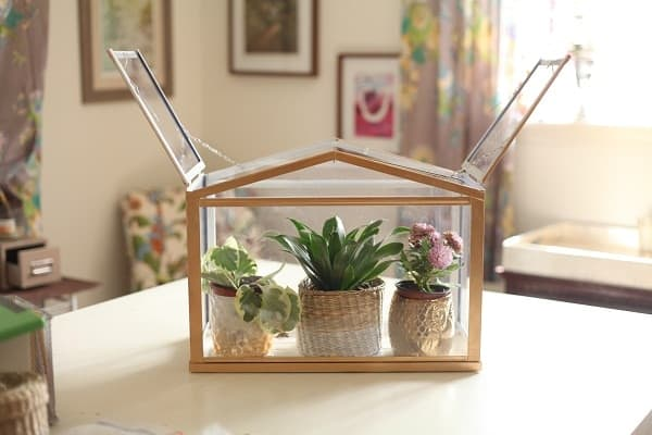 DIY Mini Elegant Indoor Greenhouse