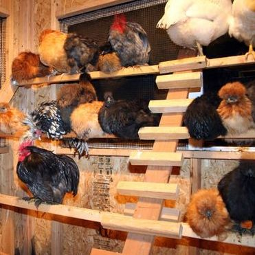 Easy Chicken Roost Ideas