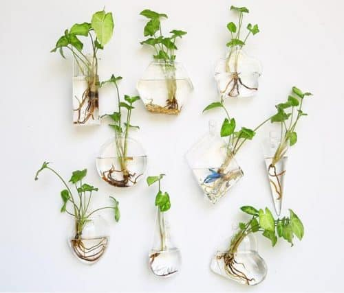Glass Wall Planters Indoor