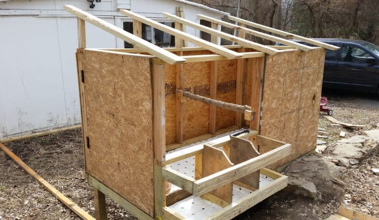 Multifunction Chicken Roost Ideas