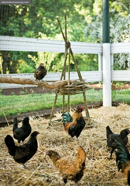 Natural Chicken Roost Ideas