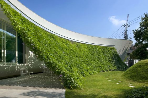 Outdoor Privacy Screens with Plants