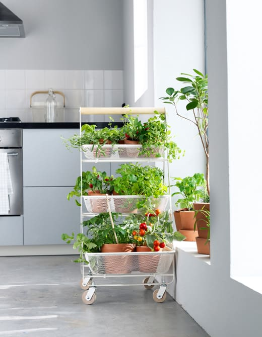 Portable Indoor Greenhouse
