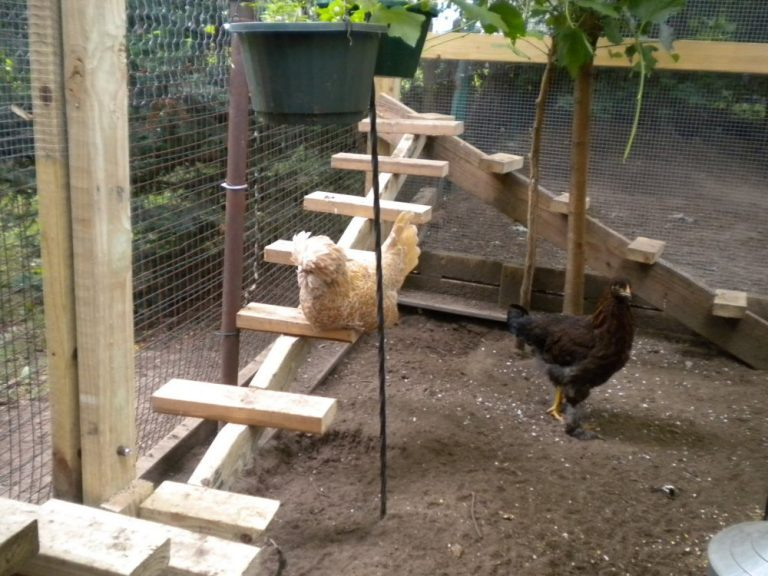Stepping Chicken Roost Ideas
