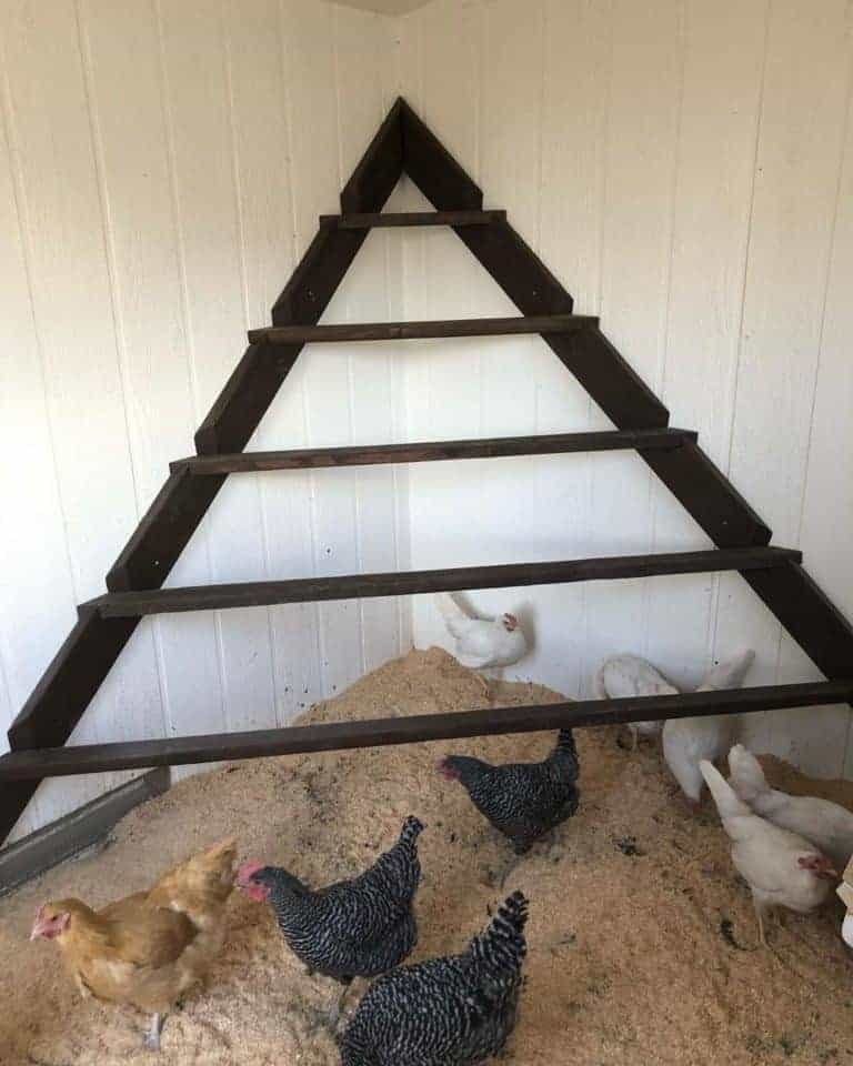 Triangle Chicken Roost Ideas